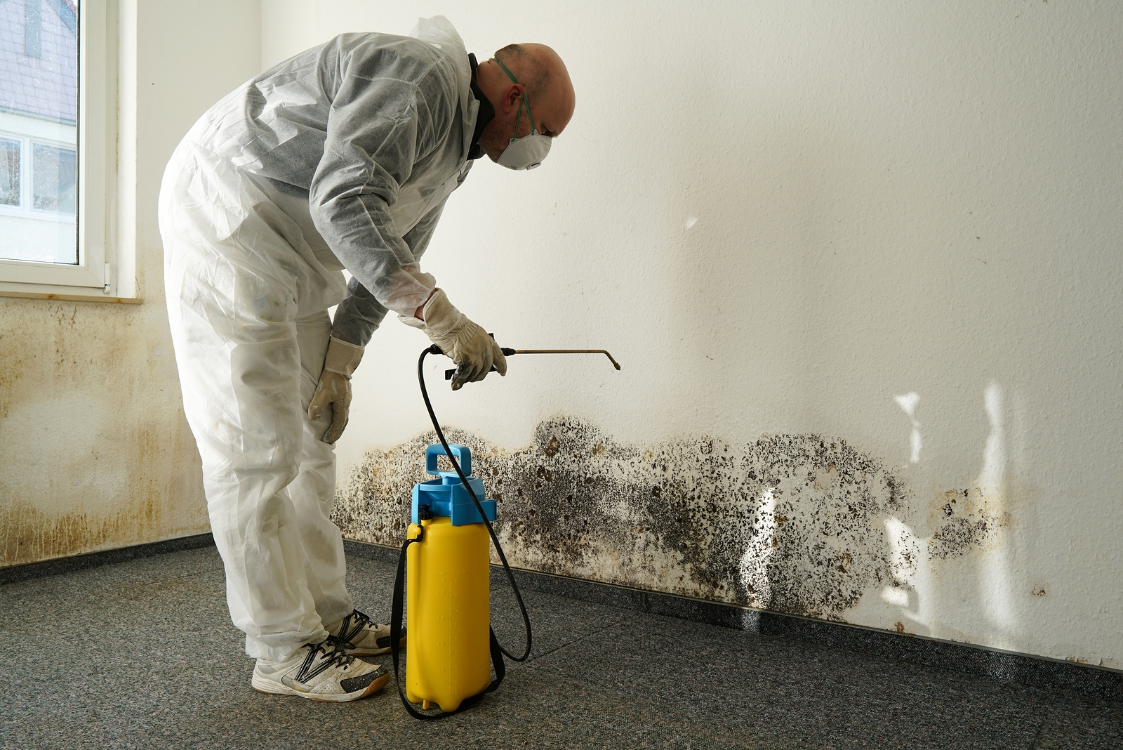 What to Do if Your Apartment has Mold - Broke-Ass Stuart's Website